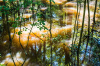 Water #3, Congaree National Park, 2017