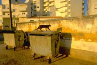 Cat and Its Shadow, Lagos, Portugal, 1987