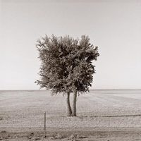 Tree in Cemetery near Springfield, Colorado, 1993