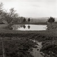 Trees Reflecting in Pond, Knox County, Ohio, 1999